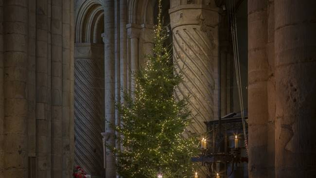 Durham NHS staff to light Durham Cathedral's iconic Christmas tree
