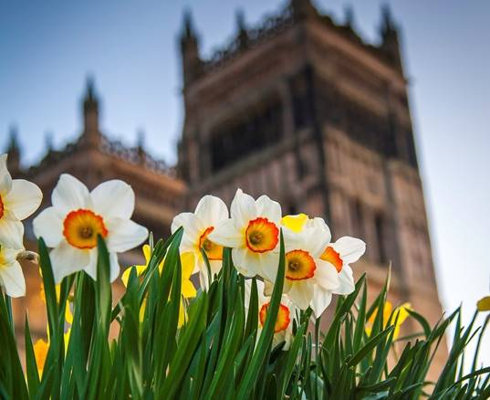 Durham Cathedral with daffodils